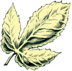 g-golden-leaf.jpg